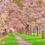 松川公園の桜お花見スポット松川遊覧船や富山城址公園!穴場市役所