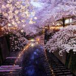 桜のお花見スポットで人気や名所【関東】東京編「六義園」
