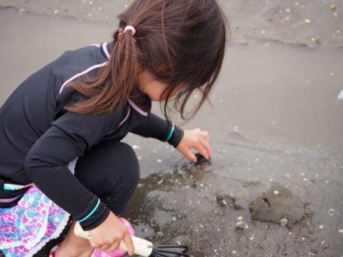 潮干狩りのベストシーズンの時期や時間帯 大潮(おおしお)とは?