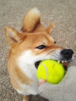 大坂なおみ 全仏オープンテニス2019女子シングルス試合日程や テレビ放送日時と対戦相手の情報は?