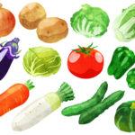 野菜の豆知識 小松菜とホーレンソウの違いは 雪ノ下キャベツと雪ノ下大根
