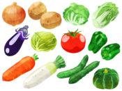 野菜の豆知識 小松菜とホーレンソウの違いは? お野菜紹介『雪ノ下キャベツ』と 『雪ノ下大根』 何気なく食べている野菜でも考えながらは面倒。 でも、わかる。 そんな野菜の選び方、 特徴などをわかりやすくご紹介したいと思います。 お時間があるときでも、読んでいってください。