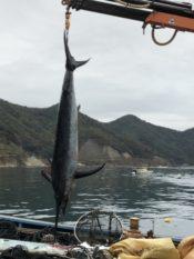 カジキ流し網漁船・北海道釧路沖で連絡途絶えていた漁船7人無事確認