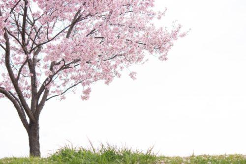 ドラゴン桜とは?長澤まさみが教師で15年ぶり続編決定!お宝映像あり