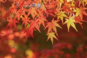 【速報】秋ドラマ視聴率2019年ランキング一覧【10月〜12月期】