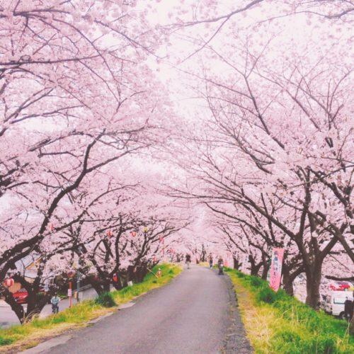 安倍昭恵夫人 花見写真あり!コロナ自粛ムードの中 桜を見る会開催